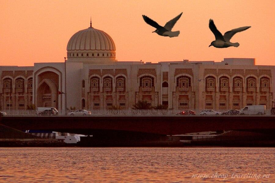 Птицы на фоне мечети в Шардже