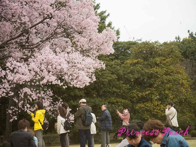 皇居東御苑櫻花雨
