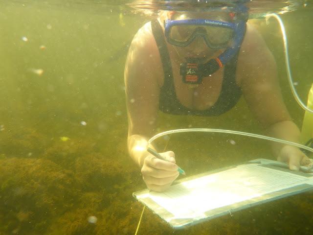 Snorklaaja kelluu vedessä bikineissä ja kirjoittaa veden alla muistiinpanoja lyijykynällä muovipaperille, joka on teipattu kirjoitusalustaan/leikkuulaudalle