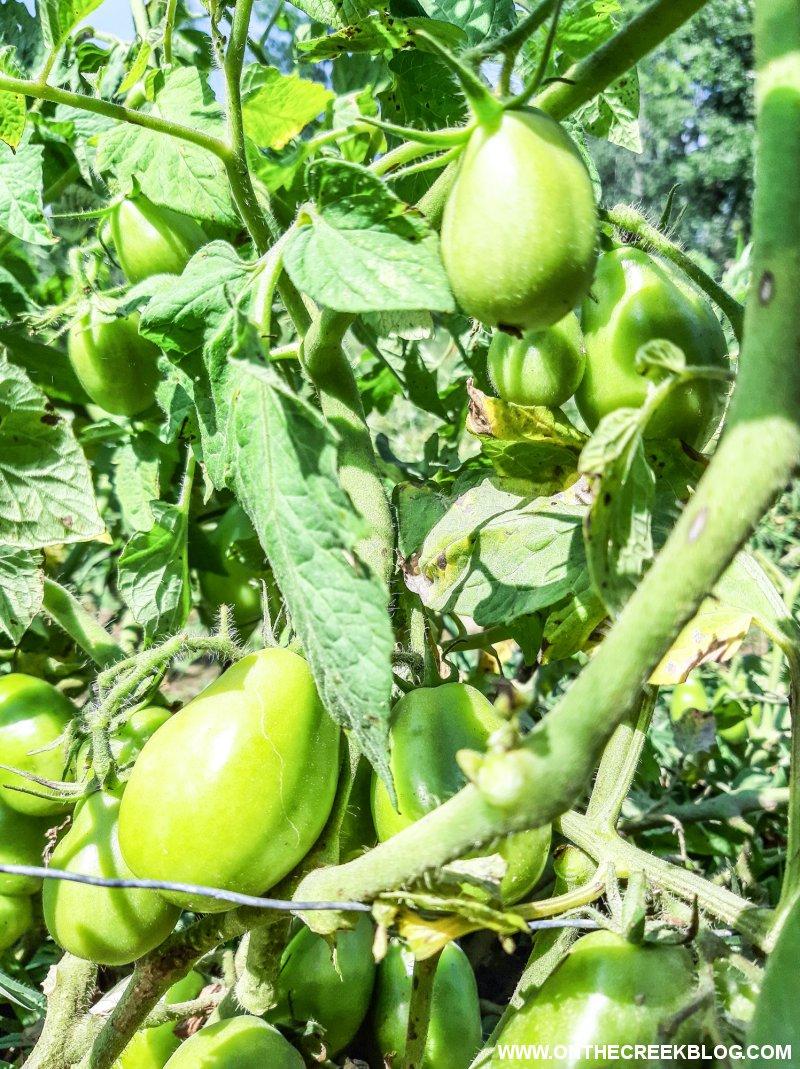 Determinate & Indeterminate Tomatoes | On The Creek Blog // www.onthecreekblog.com