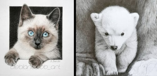 00-Animal-Drawings-Bianca-Buer-www-designstack-co