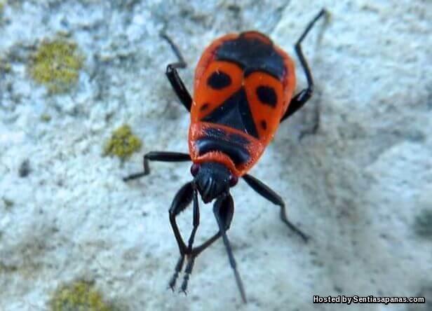Red Bugs [2].jpg