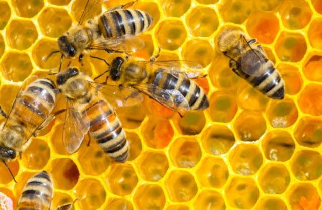 Sains dan Alquran Ungkap Lebah adalah Serangga yang Diistimewakan Allah, Simak Faktanya!