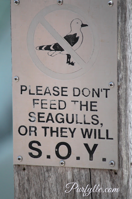 Please Don't Feed The Birds or they will...