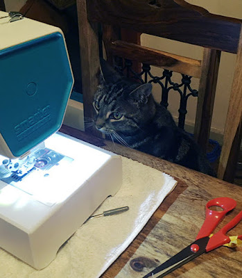 A cat looking at a sewing machine.