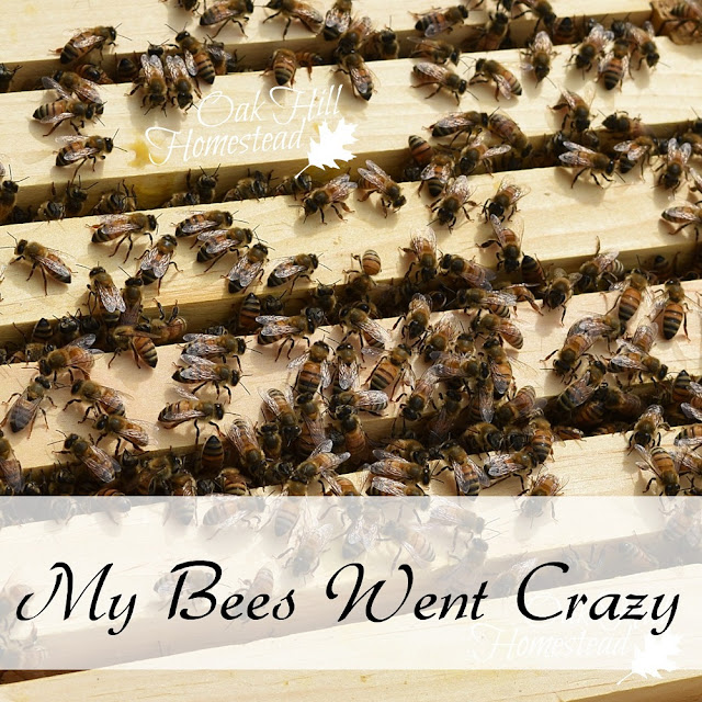 My bees went crazy and it was my fault. Oak Hill Homestead