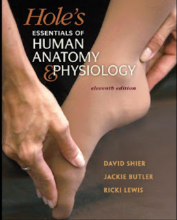 Hole's Essentials of Human Anatomy & Physiology 11th Edition