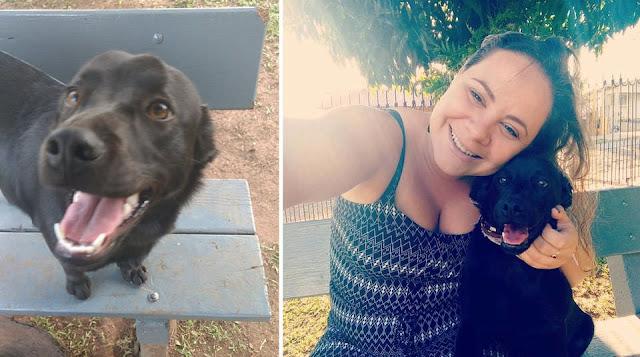 Бывший бездомный пес начал помогать другой бездомной собаке