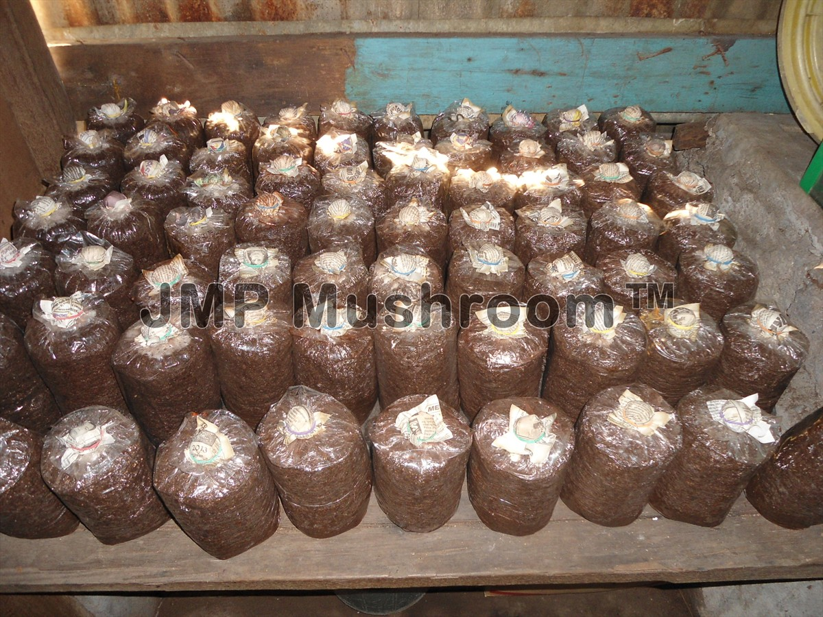 Jmp Mushroom How To Make Mushroom Fruiting Bags Using