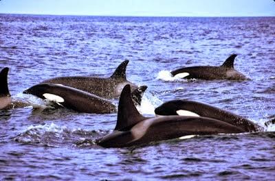 Guide de Voyage à Húsavík: Capitale de l'Observation des Baleines en Husavik (Islande)