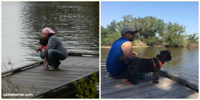 Oz the Terrier on the boardwalk in Tomoka State Park in 2014 and recent camping trip