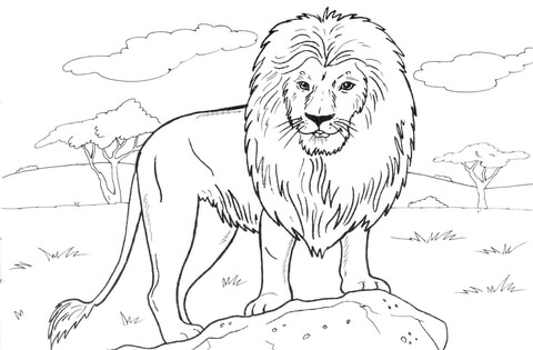 Best Picture Kings Jungle Coloring Pages For Kids