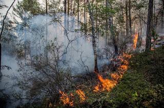 (ФОТО)По информации синоптиков 8-10 июня местами в Свердловской области ожидается высокая пожарная опасность