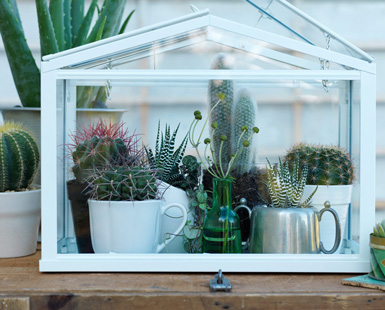 belle maison terrariums mini indoor gardens. Black Bedroom Furniture Sets. Home Design Ideas