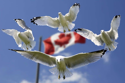 """Figure: """"That's a lot of birds – ey!"""" Which flag are these gulls fiercely protecting?"""