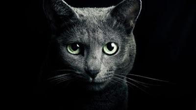A aura dos gatos podem te proteger dos fantasmas e de entidades negativas