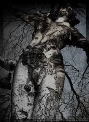 Цветущее дерево (береза) и женская функция