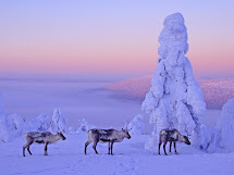 Lapland Christmas Spot Of Finland Travel And Tourism
