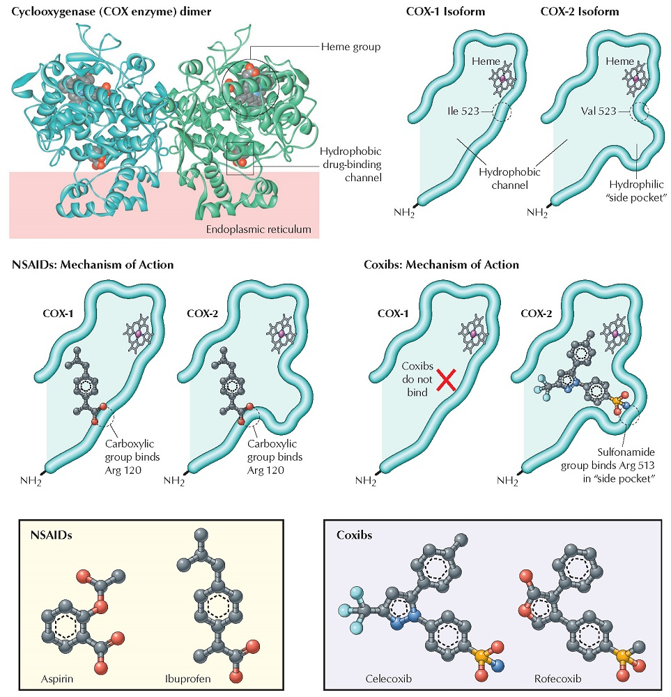 Nonopioids: NSAIDs, Selective Cyclooxygenase-2 Inhibitors, and Acetaminophen