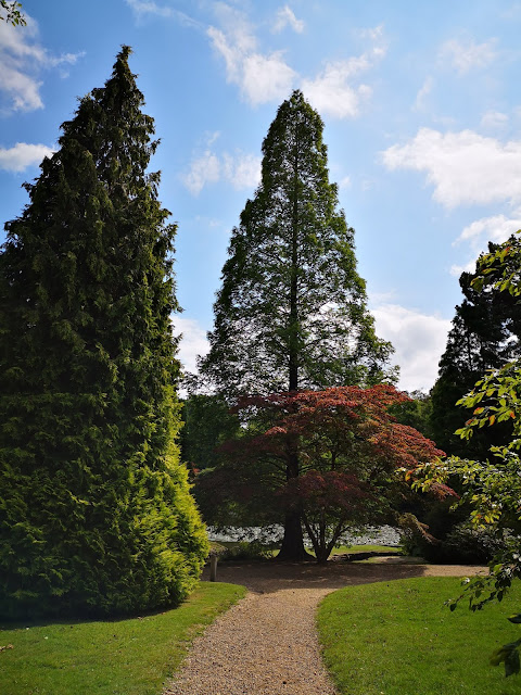 Trees at Sheffield Park