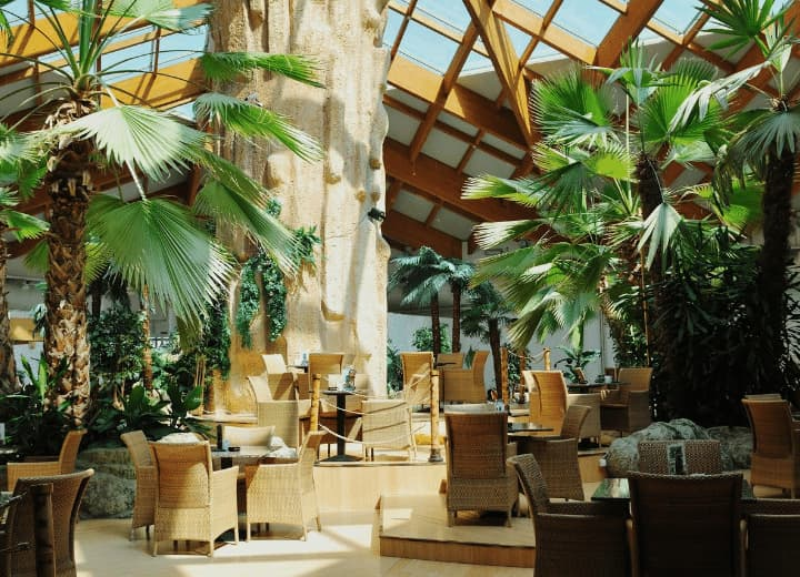 quais os benefícios de cultivar avencas e palmeiras