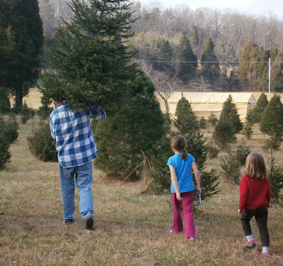 dad carrying Christmas tree with kids behind