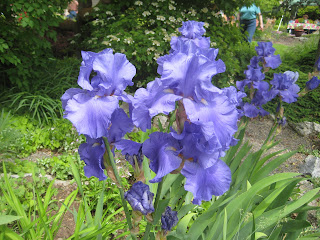Spokane in Bloom