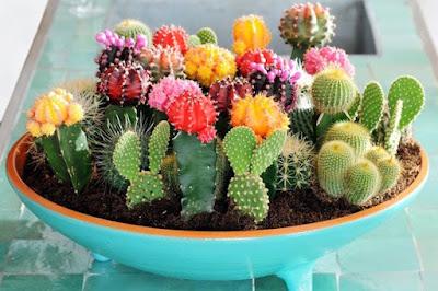 6 Manfaat Hebat Konsumsi Kaktus Bagi Kesehatan