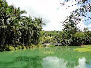 lago verde com vegetação nas laterais e ao fundo inhotim
