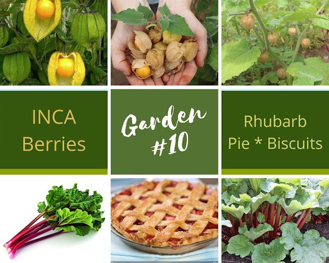Rock-n-Zen Garden Plot #10 plants identification.