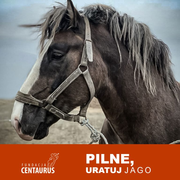 Jago koń
