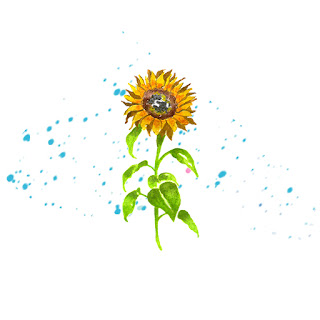 how to draw sunflower with a pencil easy step by step video