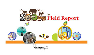 Zoology field report