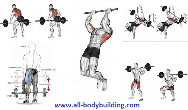 5 excellent muscle building workouts to gain weight