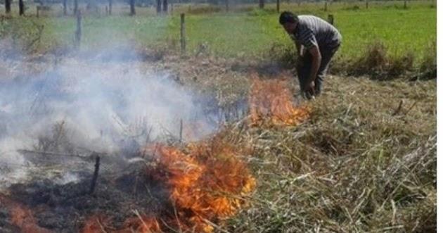 DENÚNCIA GRAVE - Instituto Chico Mendes é acusado de atear fogo na Amazônia - Digoreste News