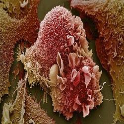 Como as células cancerígenas permanecem inativas por muitos anos?'