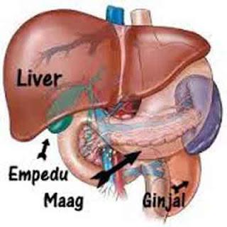 merupakan penyakit yang menyerang cuilan organ dalam badan yaitu Hati KHASIAT TEMULAWAK BUAT PENYAKIT LEVER