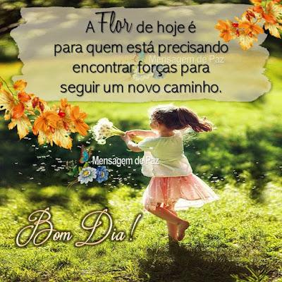 A Flor de hoje é para quem  está precisando encontrar forças  para seguir um novo caminho. Bom Dia!