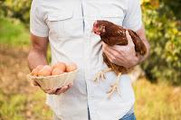 Que faire de ses poules pendant vos vacances ?