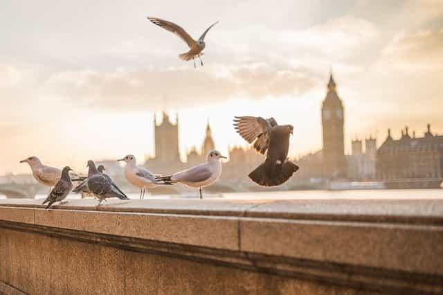 Burung Macam Hewan Penular Penyakit Berbahaya Lewat Interaksi