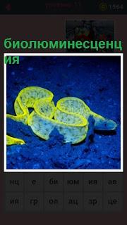 по морскому дну ползет цветная биолюминесценция
