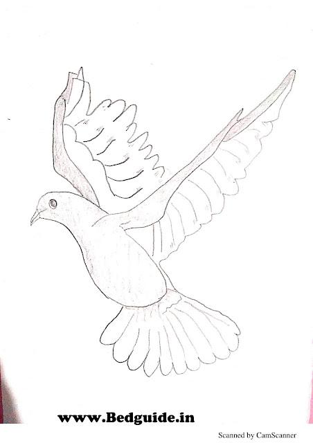 pencil shading of birds