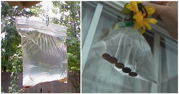 WITH THE HELP OF THIS HOMEMADE FLY CHASER YOUR HOME WILL BE FLY-FREE ALL SUMMER LONG!