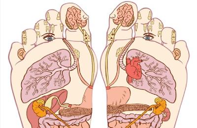 سوف تنبهر بالنتيجة العلمية حقا سبحان الله تعرف على أسرار جسمك من خلال خريطة قدميك فقط
