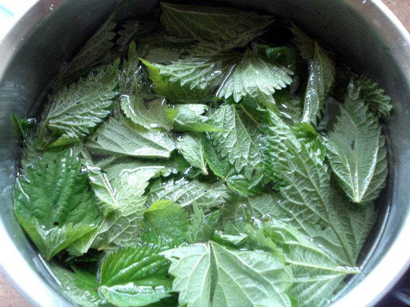 Blanch nettle leaves in boiling water