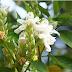 संजीवनी बूटी के समान है ये पौधा, कई रोगों के इलाज में आता है काम, जाने नाम