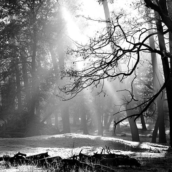 Black and White Forest Wallpaper Engine
