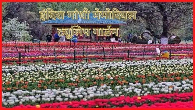 इंदिरा-गांधी-मेमोरियल-ट्यूलिप-गार्डन-Indira-Gandhi-Memorial-Tulip-Garden-In-Hindi