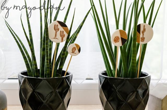 Zimmerpflanzen Bogenhanf