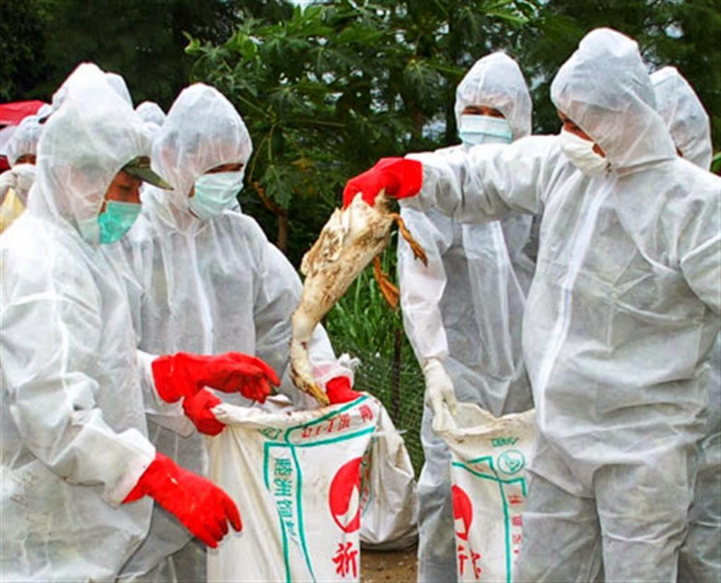 مكافحة انفلونزا الطيور